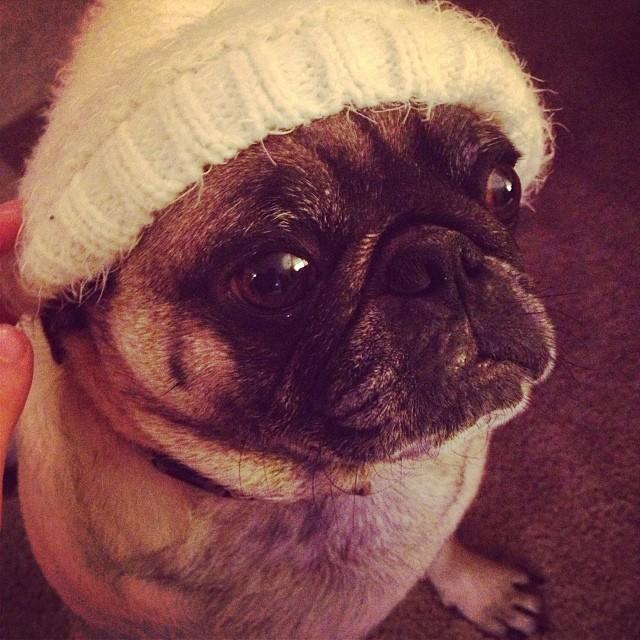 dog in a beanie